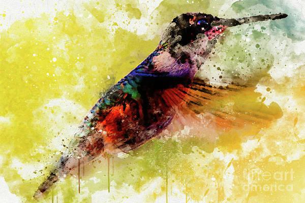 Photograph - Hummingbird by Mark Jackson