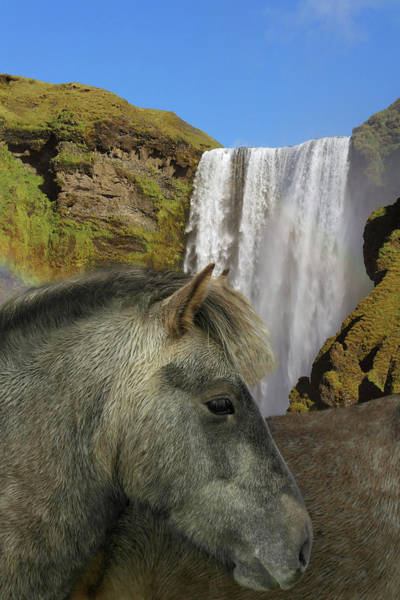 Wall Art - Photograph - Icelandic Horse by Images Etc Ltd