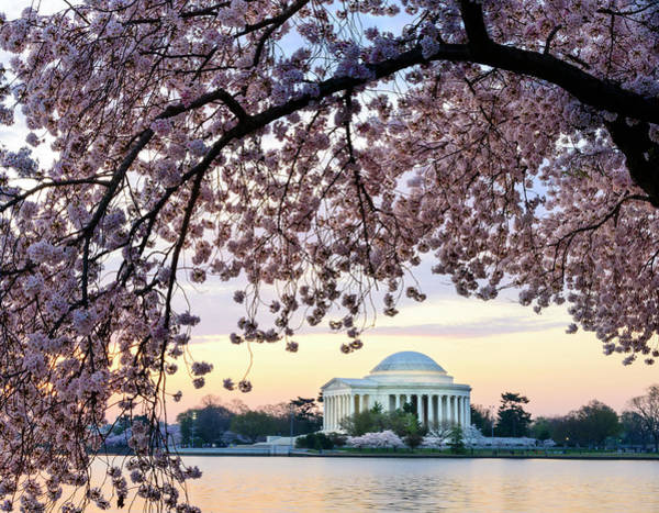 Jefferson Memorial Framed By Cherry Art Print by Ogphoto