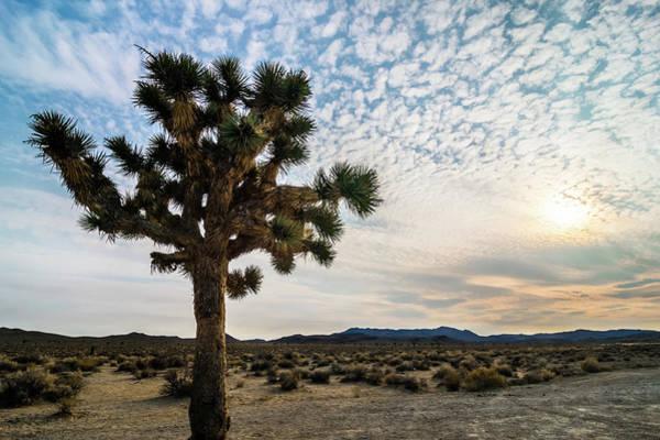 Photograph - Joshua Tree In Death Valley National Park by Alex Grichenko