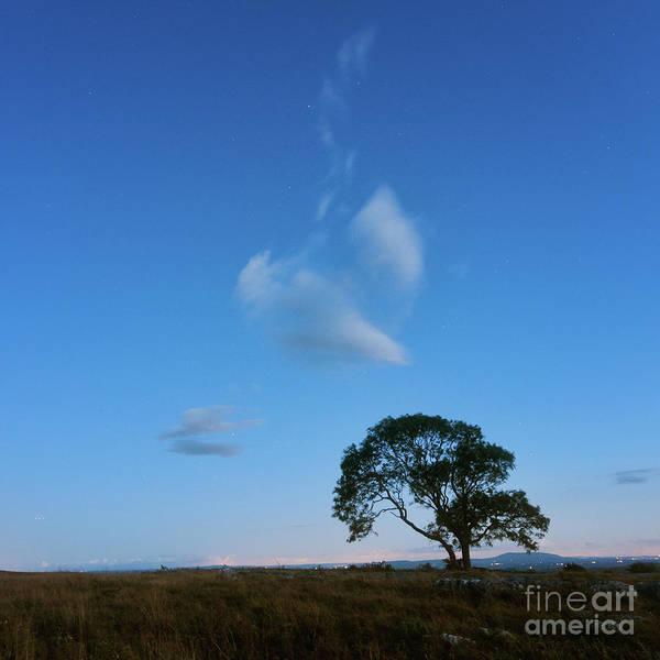 Photograph - Lonely Tree On The Limestone Pavement by Mariusz Talarek