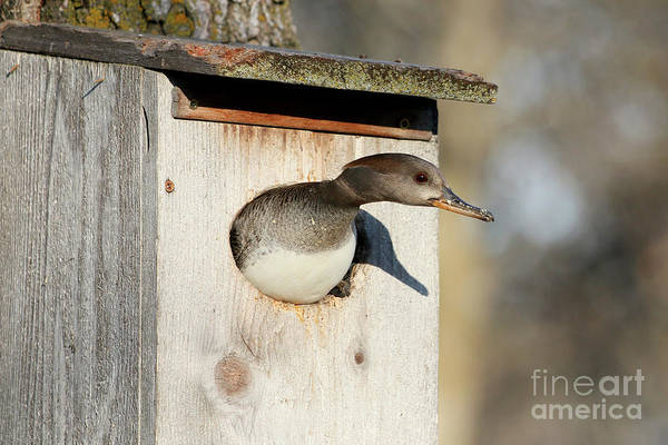 Wall Art - Photograph - Look Out by Lori Tordsen