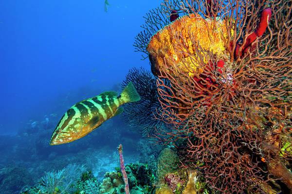 Wall Art - Photograph - Northern Bahamas, Caribbean by Stuart Westmorland