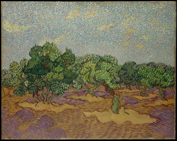 Almond Painting - Olive Trees, 1889 by Vincent van Gogh