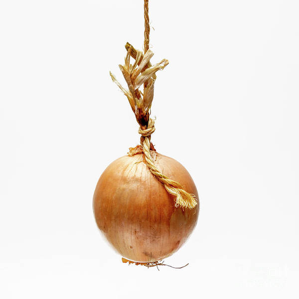 Wall Art - Photograph - Onion On A White Background by Bernard Jaubert