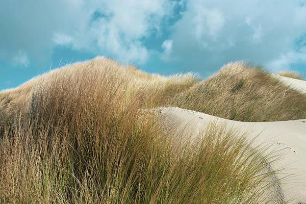 Wall Art - Photograph - Oregon Dunes by Bonnie Bruno