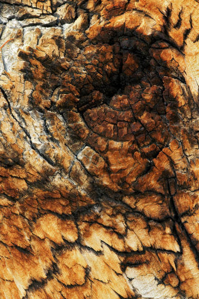 Wall Art - Photograph - Pattern In Bark Close-up Of Ancient by Adam Jones