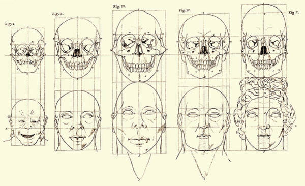 Wall Art - Photograph - Petrus Camper, Theory Of Facial Angle by Science Source