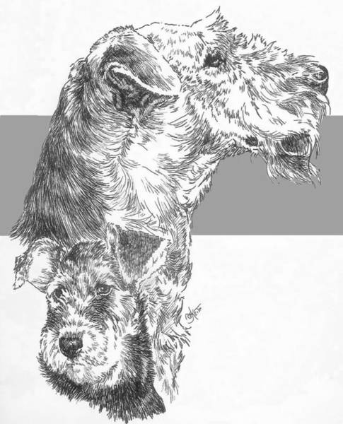 Drawing - Airedale And Pup by Barbara Keith