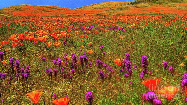 Digital Art - Poppies by Mark Jackson