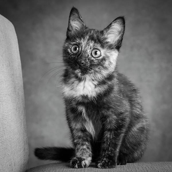 Tortoiseshell Photograph - Portrait Of A Tortoiseshell Cat by Panoramic Images