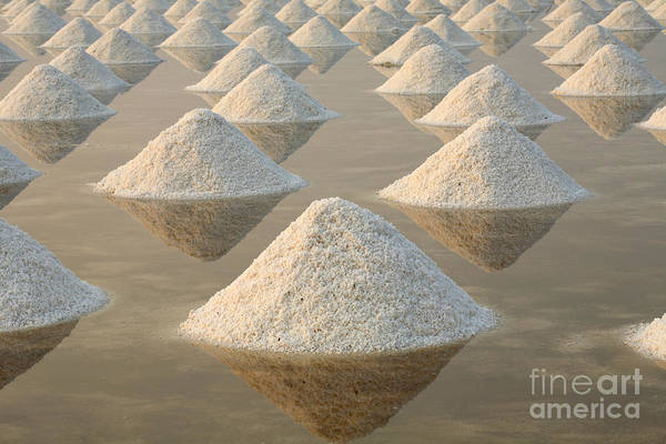 Mineral Wall Art - Photograph - Salt Fields, Phetchaburi, Thailand by Isarescheewin
