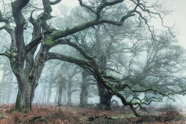 Wald Wall Art - Photograph - Sloden Inclosure - England by Joana Kruse