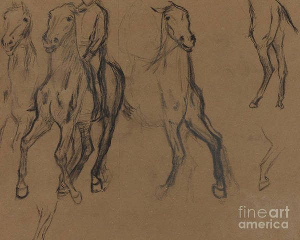 Wall Art - Drawing - Study Of Horses by Edgar Degas