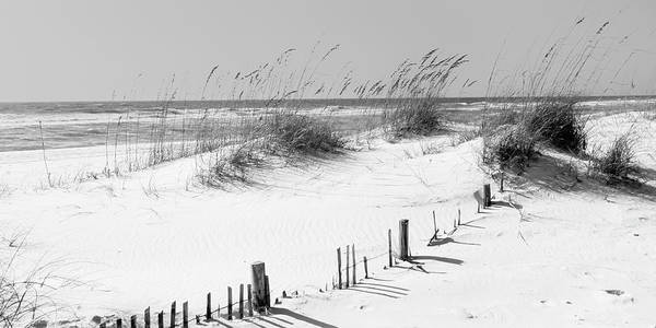 Wall Art - Photograph - Tall Grass On The Beach, Perdido Key by Panoramic Images
