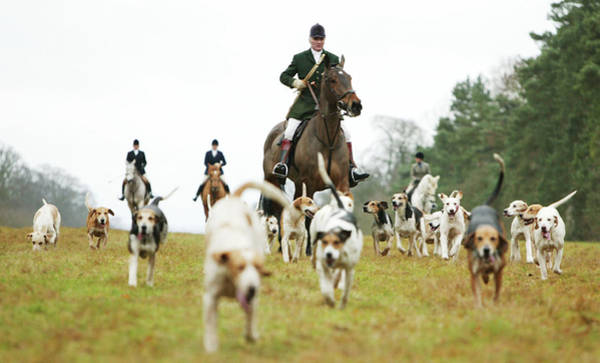Photograph - The Beaufort Hunt, Gloucestershire by Brent Stirton