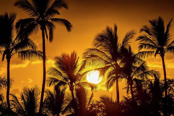 Wall Art - Photograph - The Sun Setting Through Silhouetted by Jenna Szerlag