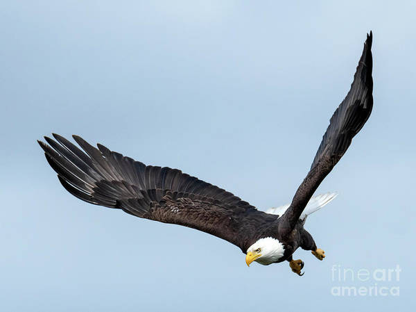 Wall Art - Photograph - To The Air by Mike Dawson