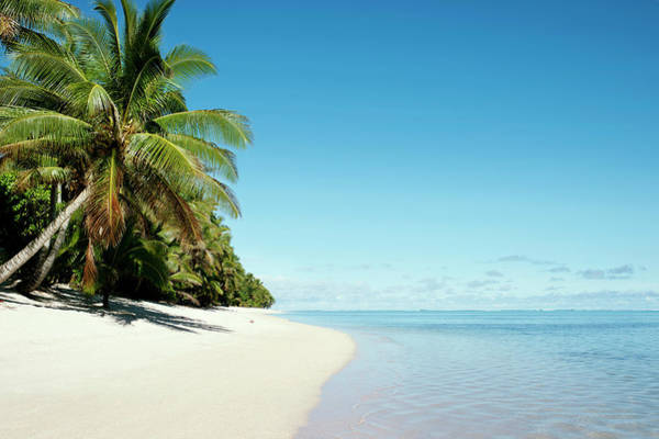Coconut Trees Photograph - Tropical Beach Scene by Devon Strong