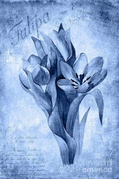 Wall Art - Painting - Tulipa by John Edwards