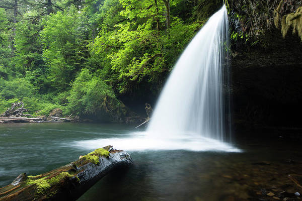 Wall Art - Photograph - Waterfall In A Forest, Samuel H by Panoramic Images