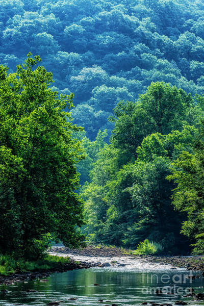 Photograph - Williams River Summer Morning by Thomas R Fletcher