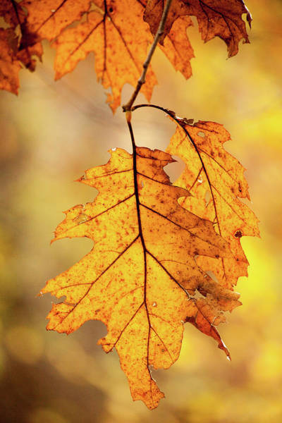 Wall Art - Photograph - Yellow Autumn by Karol Livote