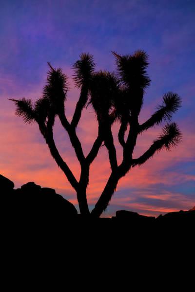 Wall Art - Photograph - Usa, California, Joshua Tree National by Jaynes Gallery