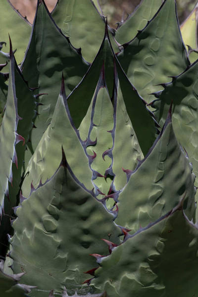 Wall Art - Photograph - Baja California, Mexico by Judith Zimmerman
