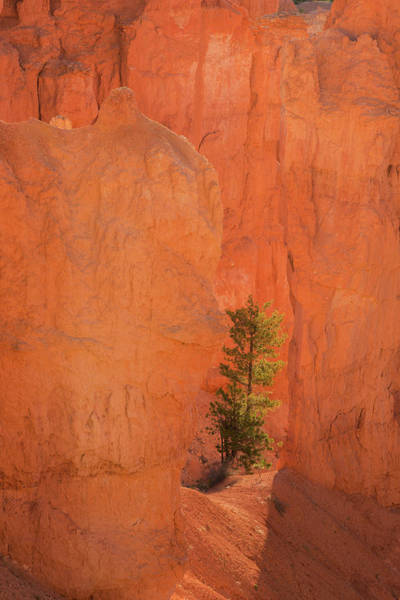 Wall Art - Photograph - Usa, Utah, Bryce Canyon National Park by Jaynes Gallery