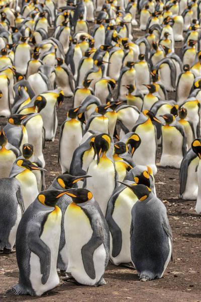 Wall Art - Photograph - Falkland Islands, East Falkland by Jaynes Gallery