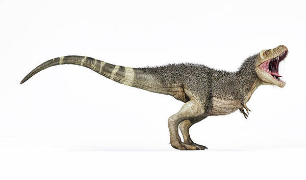 Wall Art - Photograph - 3d Rendering Of T-rex With Feathers by Leonello Calvetti