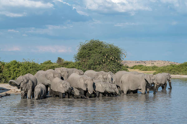 Chobe National Park Wall Art - Photograph - Africa, Botswana, Chobe National Park by Jaynes Gallery