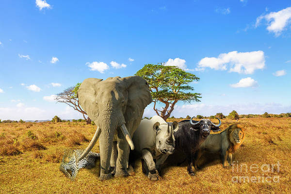 Photograph - African Big Five by Benny Marty