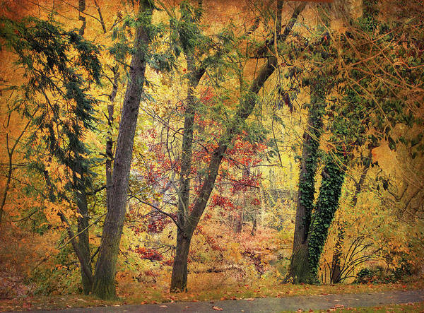 Photograph - Autumn Canvas by Jessica Jenney