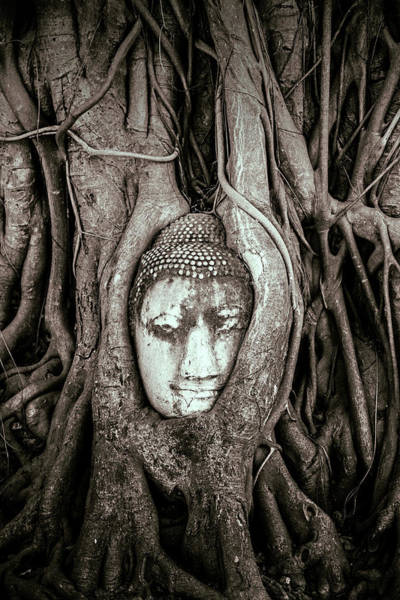 Wall Art - Photograph - Ayutthaya, Thailand by Miva Stock