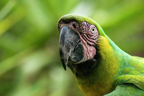 Photograph - Beautiful Macaw Bird by Rob D Imagery