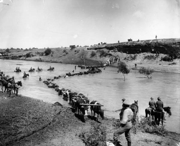 British Armed Forces Photograph - Boer War by Reinhold Thiele