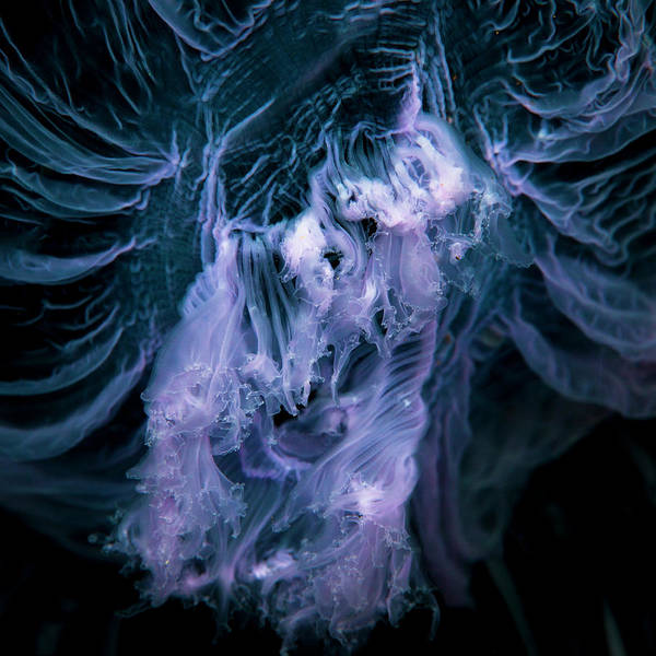 Underwater Photograph - Close Up Of Jellyfish Underwater by Cultura Rm Exclusive/richard Robinson
