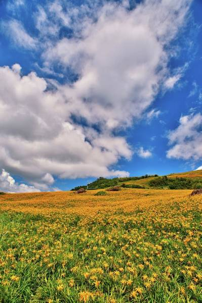 Daylilies Field On Mountain Range With Art Print