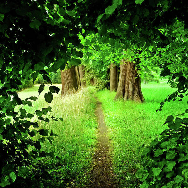 Vitality Photograph - Forest Path by Nikada