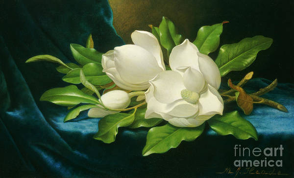 Wall Art - Painting - Giant Magnolias On A Blue Velvet Cloth by Martin Johnson Heade