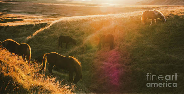 Photograph - Icelandic Landscapes, Sunset In A Meadow With Horses Grazing  Backlight by Joaquin Corbalan