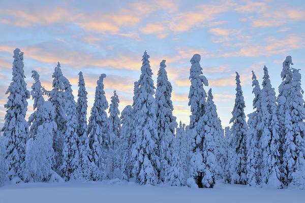 Bleached Photograph - Kuusamo, Northern Ostrobothnia, Oulu by Raimund Linke