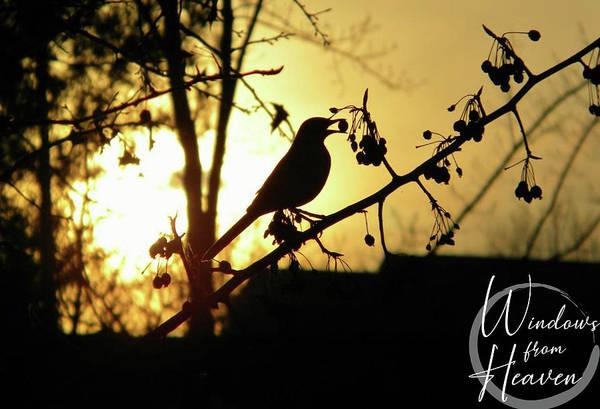 Photograph - Listen To The Birds by Matthew Seufer