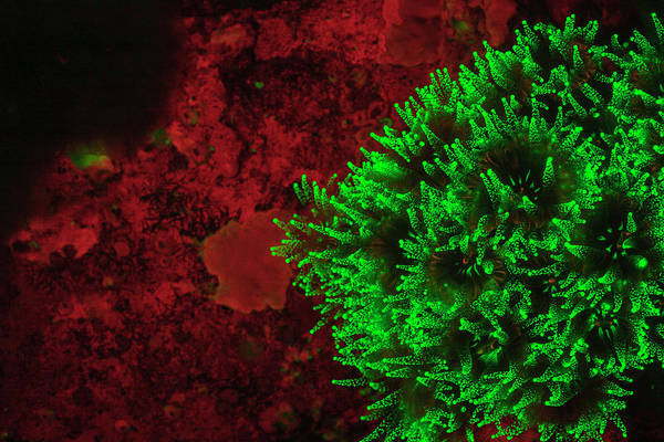 Wall Art - Photograph - Natural Occurring Fluorescence Emitted by Stuart Westmorland