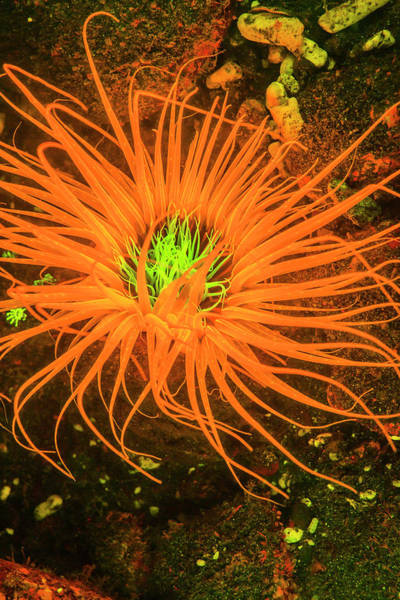 Fire Ring Photograph - Natural Occurring Fluorescence by Stuart Westmorland