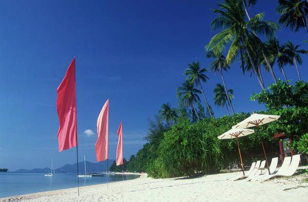 Beach Holiday Photograph - Palm Trees At Sandy Chaweng Beach by Otto Stadler