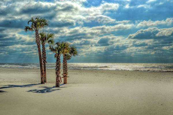 Photograph - 4 Palms On The Beach by Michael Thomas