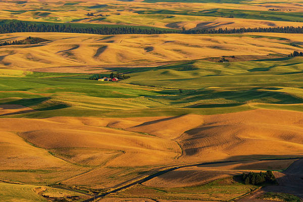 Digital Art - Palouse Hills Of Wheat Land by Michael Lee